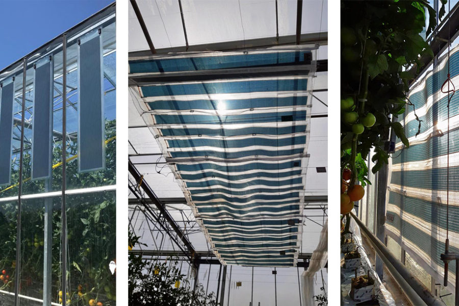 Greenhouses fitted with organic photovoltaic film